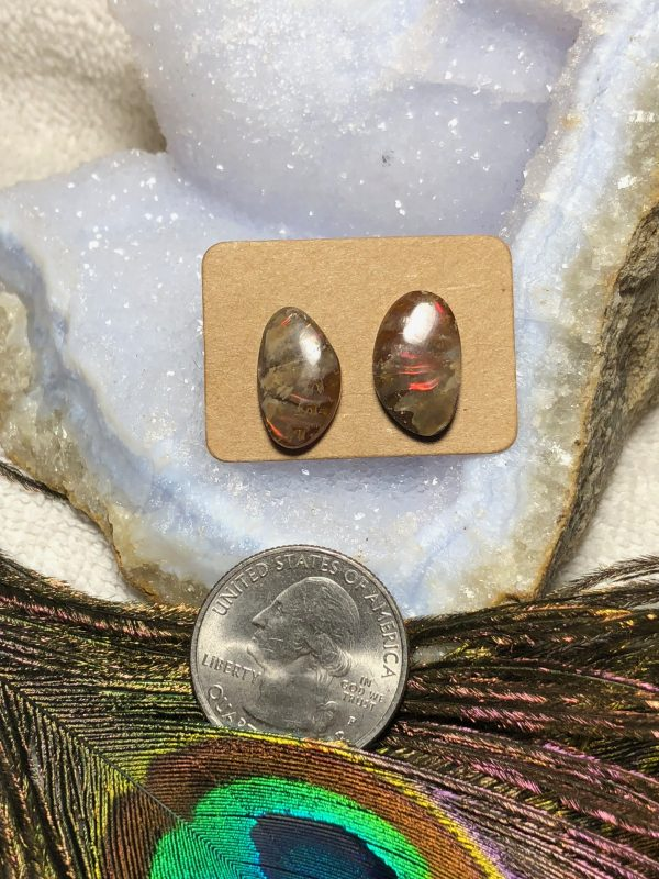 Ammonite Opalized Stud Earrings