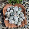 Tree Agate Tumble Crystals